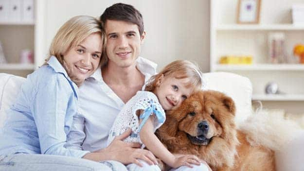 Wills & Trusts dog-young-family Direct Wills Woolacombe
